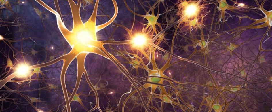 Das periphere Nervensystem des Menschen